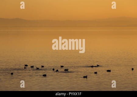 Beautiful view of a lake at sunset, with orange tones and birds on water - Stock Image