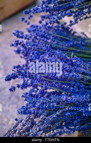 Bunch of dried blue aromatic French lavender flowers from Provence close up - Stock Image
