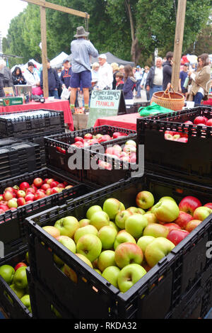 Apples for sale at stall in Salamanca Markets, Hobart, Tasmania, Australia. No MR or PR - Stock Image