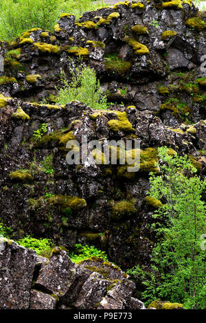 Volcanic rock strata foliage and moss in Iceland - Stock Image