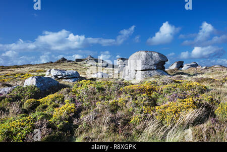 View across Chinkwell Tor in Dartmoor National Park with the heather and gorse in bloom - Stock Image