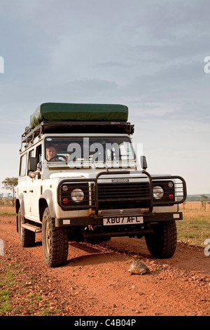 Tanzania, Serengeti. A tourist stops her 4x4 to let a tortoise cross the road. MR. - Stock Image