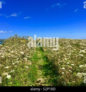 Nature trail with a field of wildflowers in Cape Breton Island Canada during summer - Stock Image