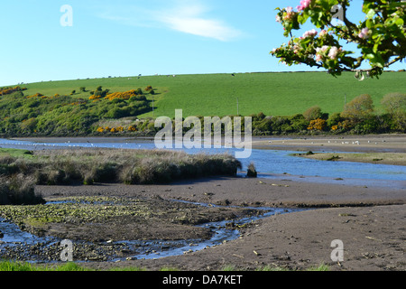 Across the tidal mud flats of the Nevern Estuary at low tide with green hill and sheep beyond, cherry blossoms in - Stock Image
