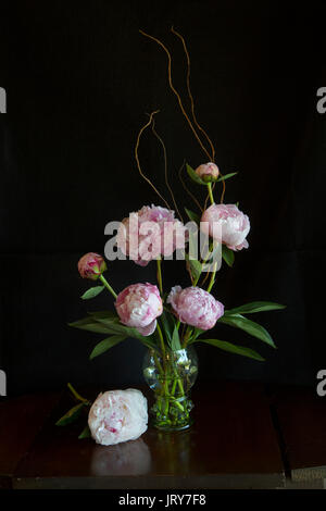 Pink Peonies in a roemer style glass with prunts on an old wood table with black background - Stock Image