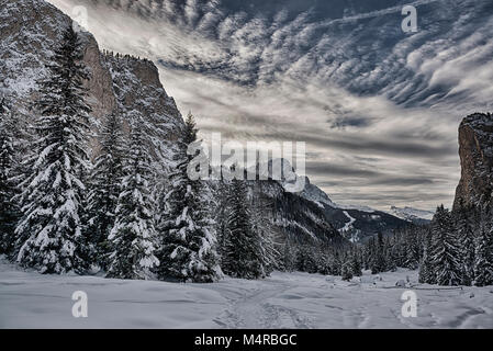 snowy forest in the Gardena valley with mountains, sky and clouds at the horizon - Dolomiti, Italy - Stock Image