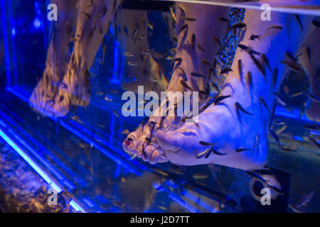 Europe, Czech Republic, Prague. Women's feet in fish tank. Credit as: Wendy Kaveney / Jaynes Gallery / DanitaDelimont.com - Stock Image
