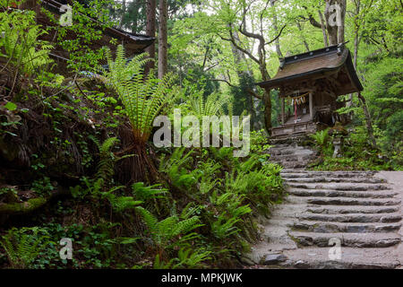 Stone steps leading to Massha Kumano Shinto shrine among heavy vegetation in Towada, Aomori prefecture, North Honshu, Japan. - Stock Image