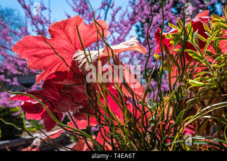 Colorful spring foliage at Historic Oakland Cemetery in Atlanta, Georgia. (USA) - Stock Image