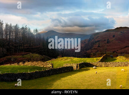 A view of dry stone walls in the hilly landscape of the English Lake District. - Stock Image