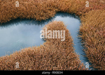 Intertidal pool of standing water with marsh grasses, dusk, Drakes Estero, Pt. Reyes National Seashore, California, USA. - Stock Image