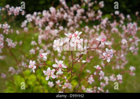 flowers - Stock Image