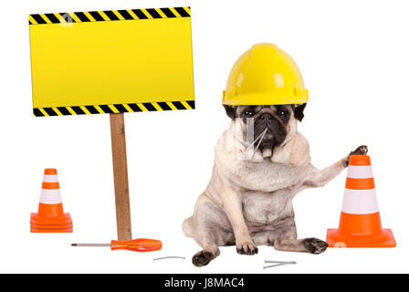 pug dog with yellow constructor worker safety helmet and cone, plus warning sign on wooden pole, isolated on white - Stock Image