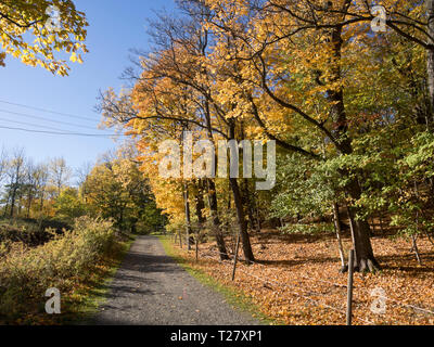 Autumnal colours and a sunny day makes a hike on the island of Hovedoya in Oslo Norway guaranteed sight for sore eyes - Stock Image