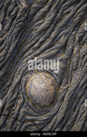 Pahoehoe lava on San Salvador in the Galapagos Islands of Ecuador - Stock Image