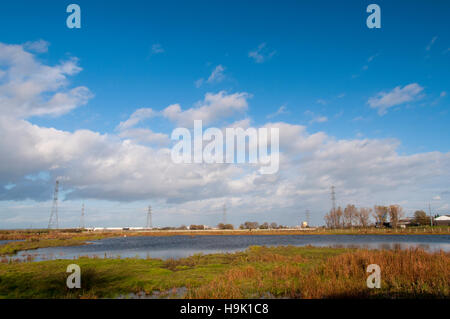 A view of wetland habitat at RSPB Saltholme, Middlesbrough, Teesside. October. - Stock Image