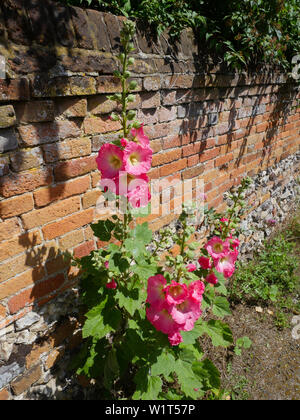 Wild Flowers next to Brick Wall, on the Ridgeway Path, North Stoke, Oxfordshire, England, UK, GB. - Stock Image