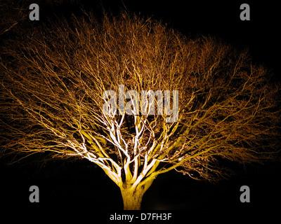 Tree in Kellenhusen at night - Stock Image