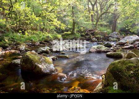The River Plym in spring at Shaugh Prior Dartmoor National Park Devon Uk - Stock Image