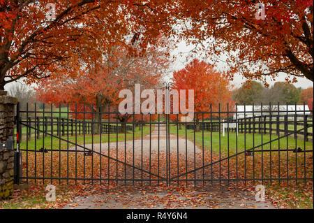 Autumn colors at a Kentucky horse farm - Stock Image