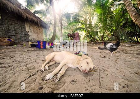 Village life on Yele Island, the Turtle Islands, Sierra Leone. - Stock Image