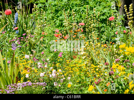 A bed of small, colourful flowers of assorted variety growing at Palheiro Gardens on the Palheiro Estate, Madeira. - Stock Image