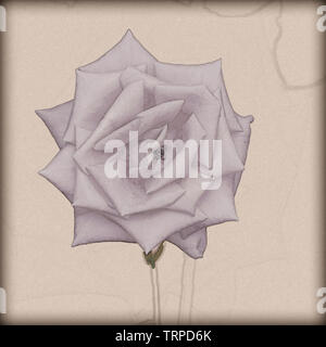 Digitally enhanced vintage style sketch of a perfect Salmon coloured rose head - Stock Image