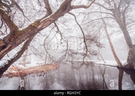 Branches hanging over a river in the winter with snow by the riverside in january - Stock Image