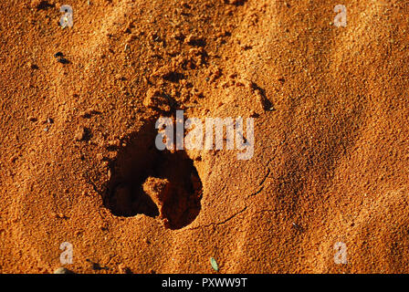 Footprint in the sands Human or animal - Stock Image