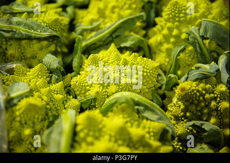Horizontal shot of beautiful and unusual Romanesco broccoli, an alternative vegetable for broccoli or cauliflower at the farmers market - Stock Image