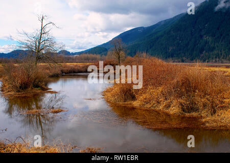 A winter scene of a pond with dried grass and a mountain in the background on a cloudy day.  Pitt River dike, British Columbia, Canada. - Stock Image