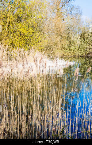 One of the lakes at Cotswold Water Park. - Stock Image
