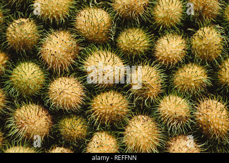top view of yellow rambutan. Rambutan is a local fruit on malaysia, native to the Malay-Indonesian region, and other regions of tropical Southeast Asi - Stock Image