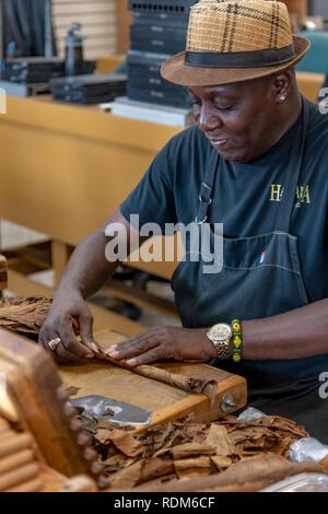 Cuban man making cigars in cigar factory in Little Havana, Miami, Florida - Stock Image