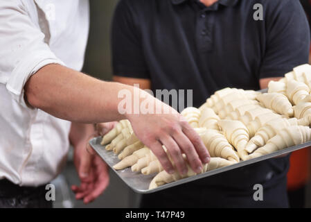Close up of Pastry Chef showing a tray of fresh raw croissants dough . - Stock Image