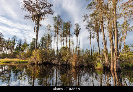 A varied landscape in the Okefenokee swamp on a sunny day, with reflections in the still water. - Stock Image