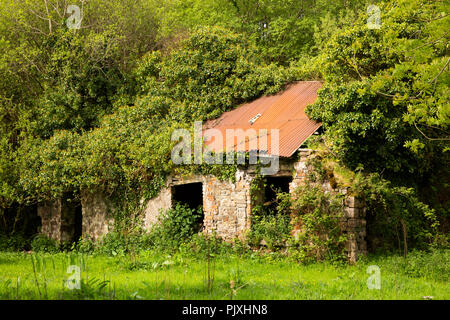 Ireland, Co Leitrim, Tarmon, Spencer Harbour, ruins of abandoned tin-roofed cottage - Stock Image