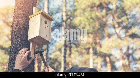 ornithologist installing birdhouse on the tree trunk - Stock Image