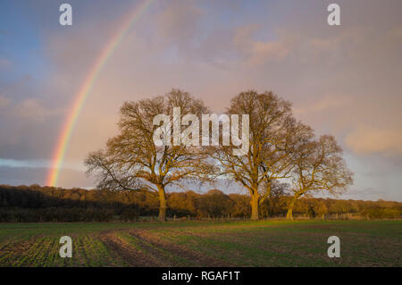 A Winter rainbow lights up the evening sky on farmland near Henley-on-Thames - Stock Image
