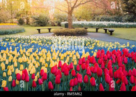 Tulips and flowers at Keukenhof gardens, Lisse, Netherlands - Stock Image