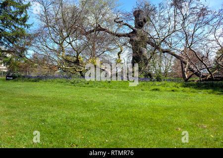 Kedleston Hall, Kedleston, Derbyshire, UK - Stock Image