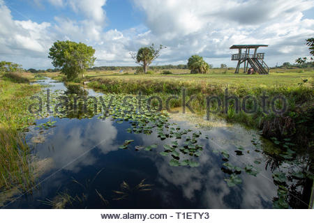 Loxahatchee National Wildlife Refuge, Broward County, Florida - Stock Image