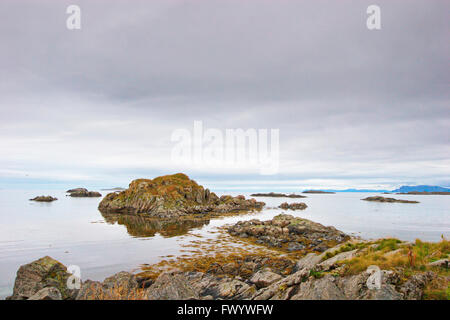 Seagulls are sitting on rocks at the coast of the North Atlantic in Stø on island Langøya ( Vesterålen - Stock Image