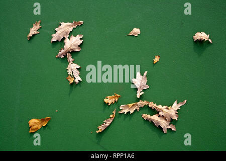 Leaves on Green Background - Stock Image