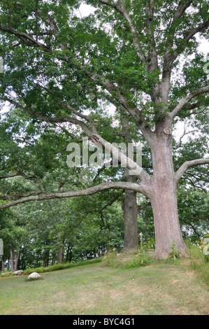 Old tree - Stock Image