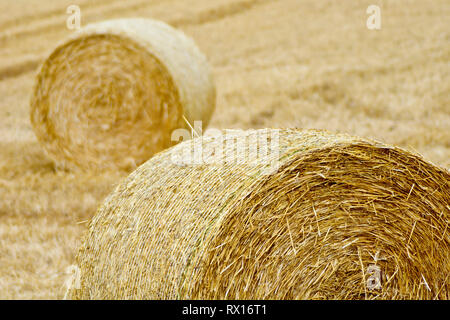 A couple of haybales sitting in a recently harvested field of wheat. - Stock Image