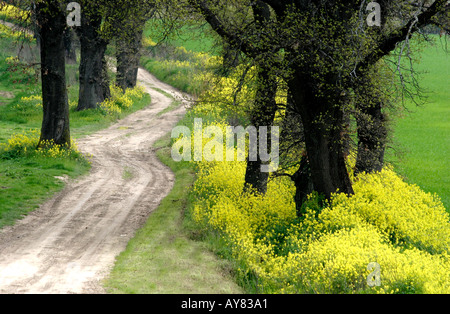 Yellow spring wild flowered path near Tolentino Le Marche the Marches Italy - Stock Image