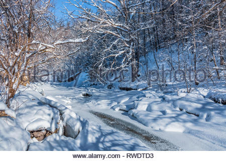 Fresh snowfall on trees beside Rouge River in winter in Rouge National Urban Park an urban wilderness in Toronto Ontario Canada. - Stock Image