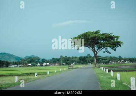 Clear skies and single tree beside a road - Stock Image