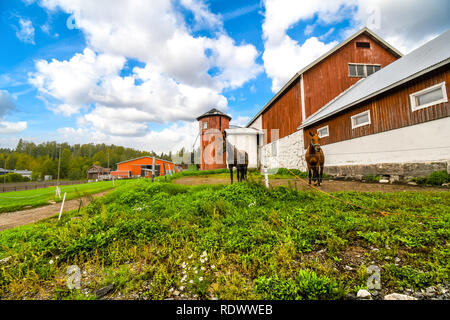 Two thoroughbred horses stand together outside a vintage barn and silo at a working horse farm in Sipoo Finland. - Stock Image